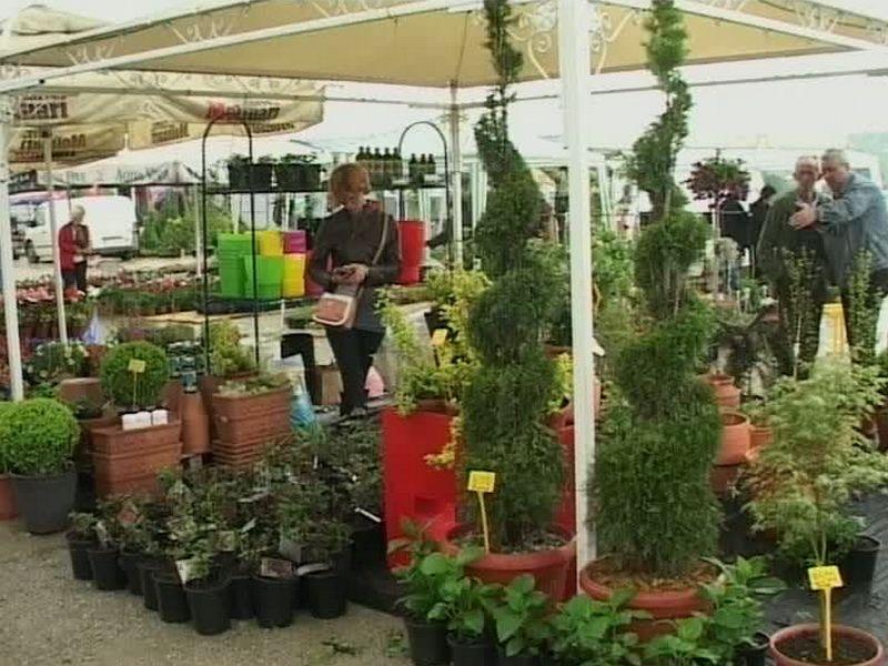 saj.hortikulture